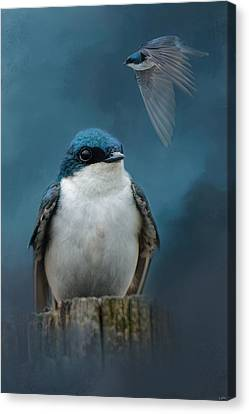 The Beautiful Tree Swallow Canvas Print by Jai Johnson