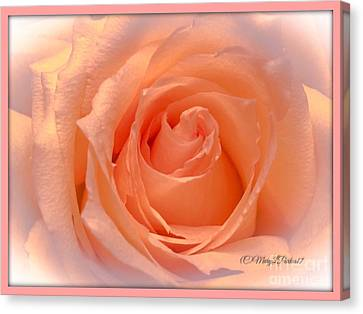 The  Beauty Of A Rose  Copyright Mary Lee Parker 17,  Canvas Print