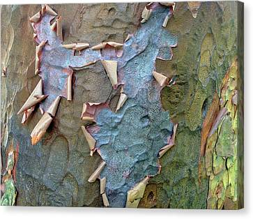 The Beauty Of Bark Canvas Print by Jessica Jenney