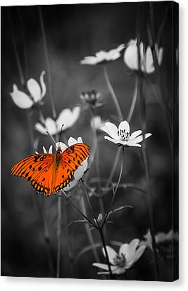 The Beauty Of The Monarch Canvas Print by Parker Cunningham
