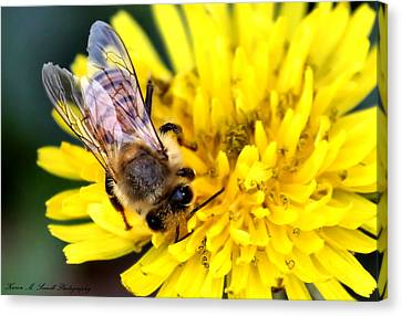 The Bee Canvas Print by Karen Scovill