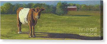 The Belted Cow Canvas Print by Terri  Meyer