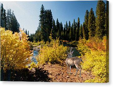 The Bend Of The Rogue River Canvas Print by Diane Schuster