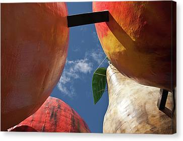 Canvas Print featuring the photograph The Big Fruit by Odille Esmonde-Morgan