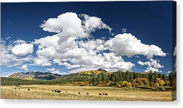 The Big Picture Canvas Print by Cathy Neth