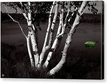 The Birch And The Green Dingy Canvas Print