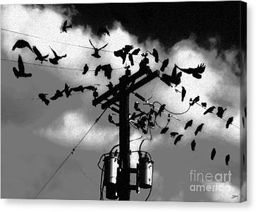 The Birds Canvas Print by David Lee Thompson