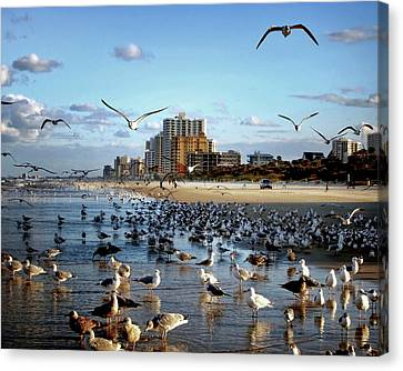 Canvas Print featuring the photograph The Birds by Jim Hill