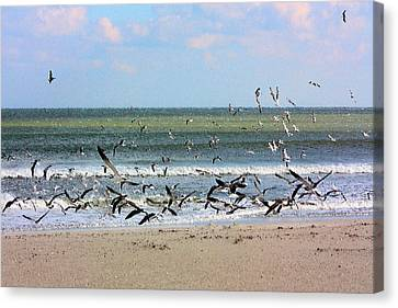 Flying Seagull Canvas Print - The Birds by Kristin Elmquist