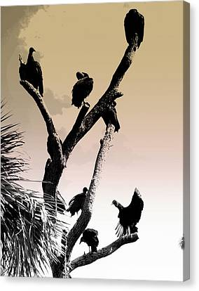 Canvas Print featuring the photograph The Birds by Laura DAddona