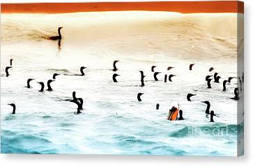 The Birds Santa Rosa Island Canvas Print by Gus McCrea
