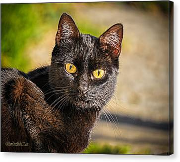 The Black Cat Canvas Print