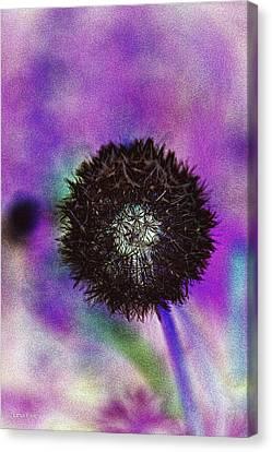 The Black Dandolion Canvas Print by Lesa Fine