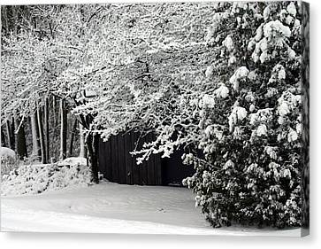 The Blizzard Is Over Canvas Print by Jack G  Brauer