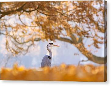 The Blue Heron And The Red Tree Canvas Print by Roeselien Raimond