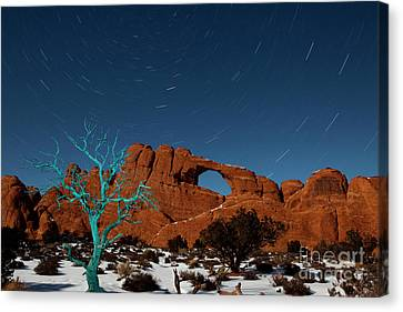 Star Trails Canvas Print - The Blue Tree by Keith Kapple