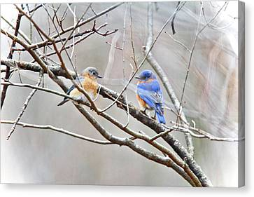 The Bluebirds Of Happiness Canvas Print by Mother Nature