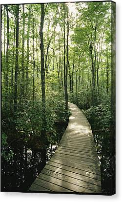 The Boardwalk Nature Trail In Great Canvas Print