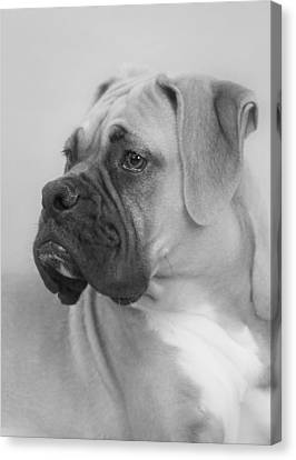 The Boxer Dog - The Gentleman Amongst Dogs Canvas Print by Christine Till