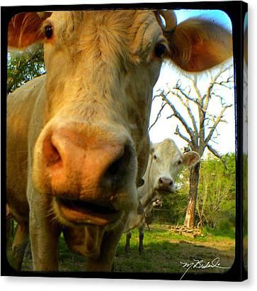 The Breeland Herd Canvas Print