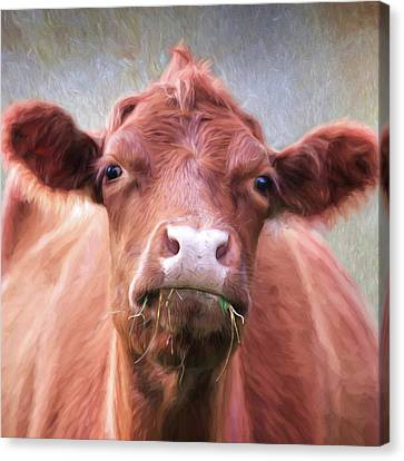 Counry Canvas Print - The Brown Cow by Lori Deiter