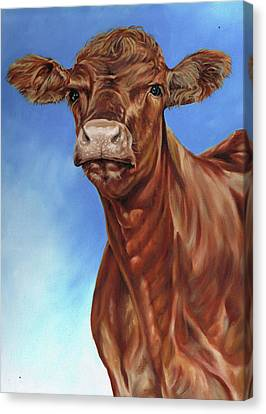 The Brown Cow Canvas Print by Richard Mountford