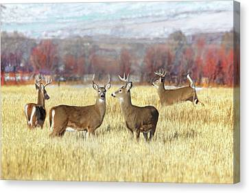 Canvas Print featuring the photograph The Bucks Stop Here White-tail Deer  by Jennie Marie Schell