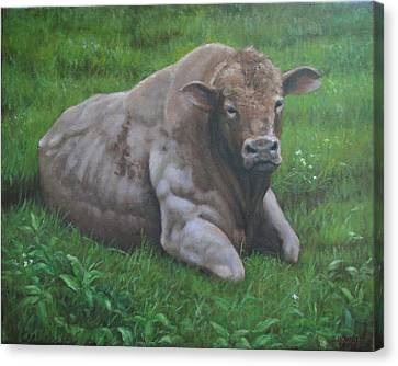 The Bull Canvas Print by Stephen Howell