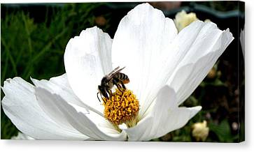 The Busy Bee Canvas Print by Carol Grimes