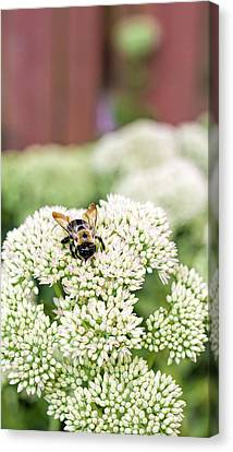 The Busy Gardener  Canvas Print by SharaLee Art