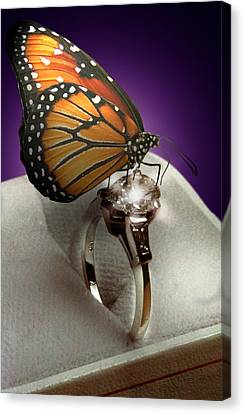 The Butterfly And The Engagement Ring Canvas Print by Yuri Lev