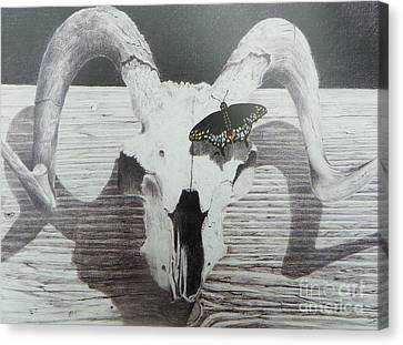 Abstract Seascape Canvas Print - The Butterfly And The Skull by David Ackerson