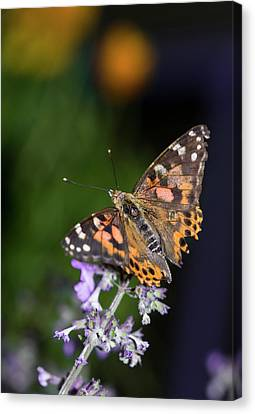 Canvas Print featuring the photograph The Butterfly Effect by Alex Lapidus