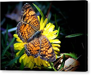 The Butterfly  Canvas Print by Karen Scovill