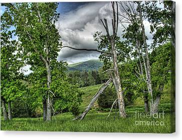 The Buzzard Trees Canvas Print by Pete Hellmann