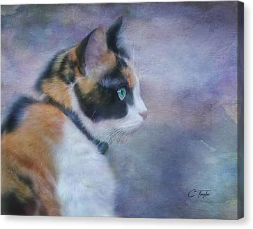 Canvas Print featuring the digital art The Calico Staredown  by Colleen Taylor