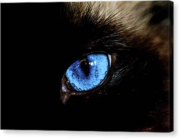 The Cat Eye Canvas Print