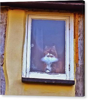 The Cat In The Window Canvas Print by Anne Kotan