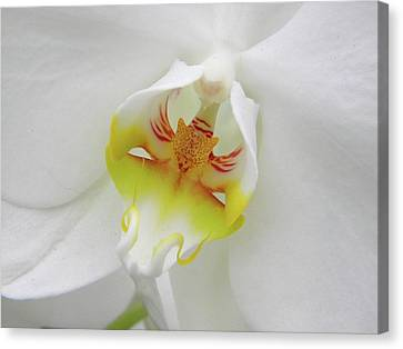 Canvas Print featuring the photograph The Cat Side Of An Orchid by Manuela Constantin