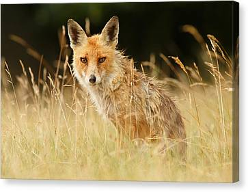 The Catcher In The Grass - Wild Red Fox Canvas Print by Roeselien Raimond