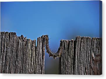 The Caterpillar Canvas Print by Cendrine Marrouat