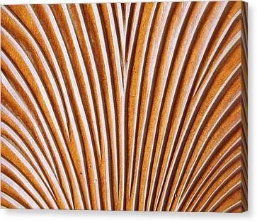 Canvas Print - The Chair II by Anna Villarreal Garbis