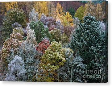 The Changing Season Canvas Print by Tim Gainey