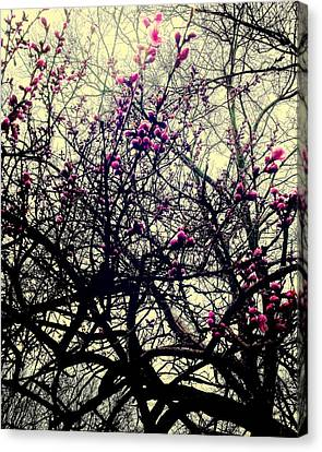 The Chaos Under The Bloom Canvas Print by Tammy Hileman
