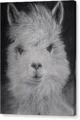 The Charming Llama Canvas Print by Adrienne Martino