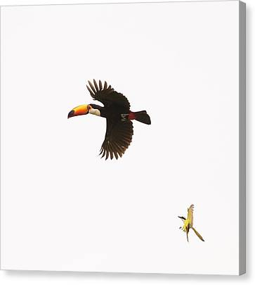 Canvas Print featuring the photograph The Chase by Alex Lapidus