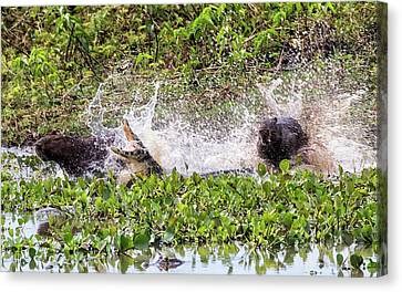 Canvas Print featuring the photograph the Chase by Wade Aiken