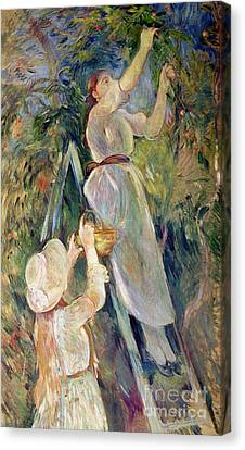 Picker Canvas Print - The Cherry Picker by Berthe Morisot