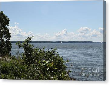 The Chesapeake From Turkey Point Canvas Print