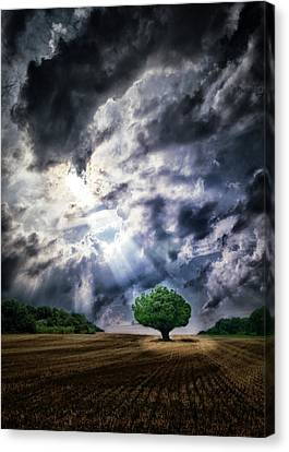 Canvas Print featuring the photograph The Chosen by Mark Fuller